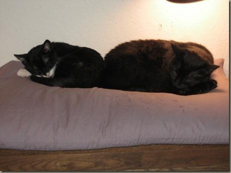 kitties 6-3-12_0002