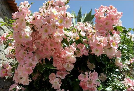 Marialva - Glória Ishizaka -  rosa
