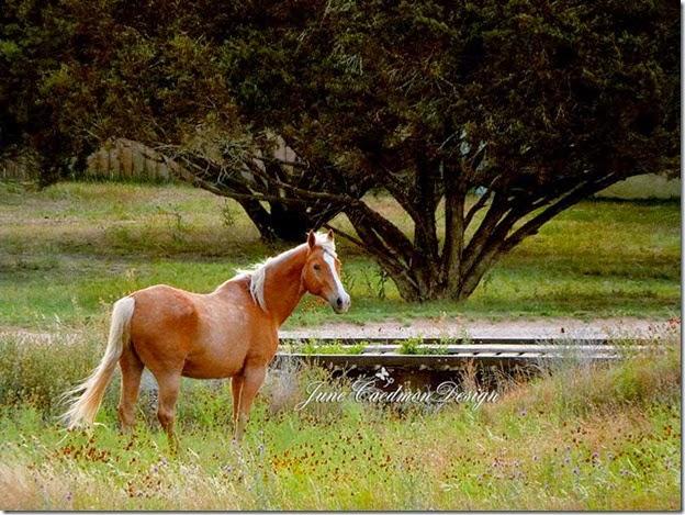 Horse_kk_achieve