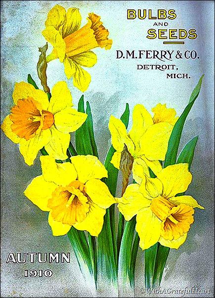 Daffodil Poster 2