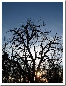 111231_tree_silhouette_4