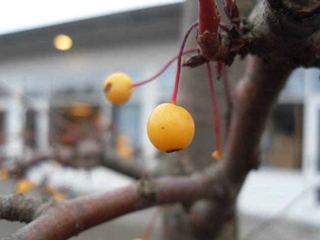 Skolegården december 2012