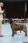 20130511-BMCN-Bullmastiff-Championship-Clubmatch-2362.jpg