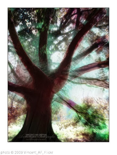 'Tree of Life' photo (c) 2009, Vincent_AF - license: http://creativecommons.org/licenses/by-sa/2.0/