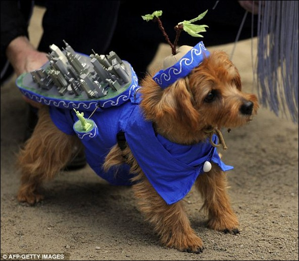 This dog went all out by dressing up as New York City
