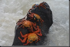 Sally proudfoot crabs 3