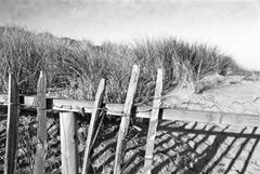 Sand-Dune-Fencing-9