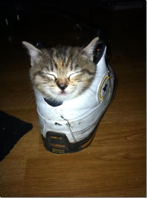 Gatos Felizes (20)