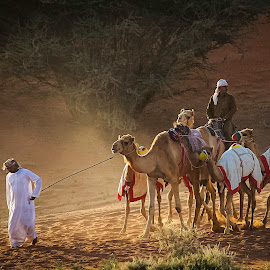 camel shepherds by Manny Fajutag - People Street & Candids
