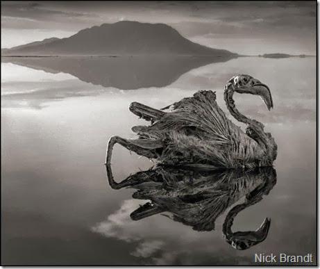lago natron1
