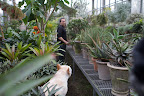 Ryan, the greenhouse is so organized and you take such good care of all the plants.  They've never looked more beautiful!