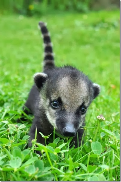 cute-baby-animals-4