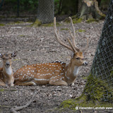 Wildpark-PF_2012-04-29_998.JPG