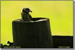 Bradgate Park D300s X14  04-06-2012 13-55-035