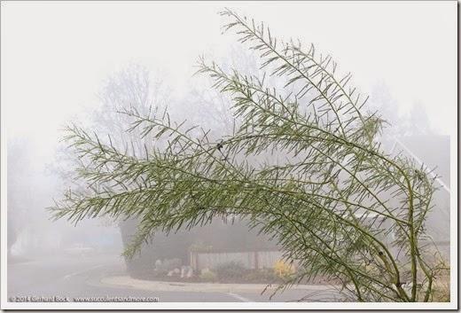 141223_fog_018