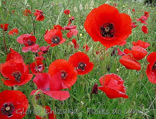 Gloria Ishizaka - minha flor 7