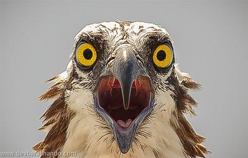 fotos de animais na hora certa desbaratinando  (22)