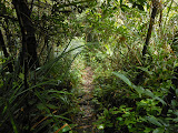 The pleasant trail along the ridge of Gunung Ranai (Dan Quinn, September 2013)