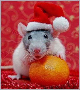 Cute-Christmas-Animals-21