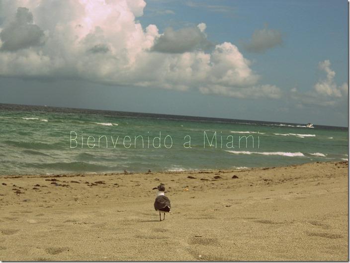 Bienvenido a Miami