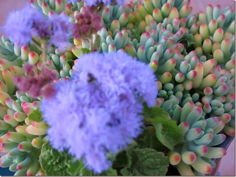 12_Flores da tia_4