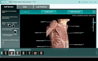 Screenshot of Practice Anatomy Lab (PAL3)