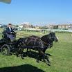 giostra dei cavalli 070.jpg