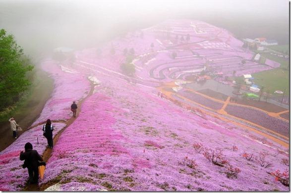 pink-park-japan-12
