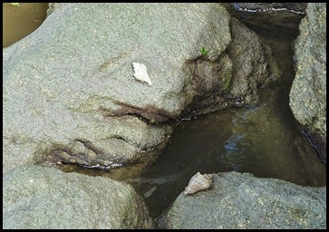 04e2 - Hermit Crabs enjoying the sun along the river