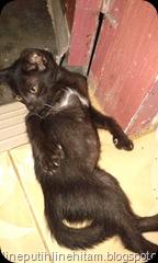 Enam si kucing hitam buncit