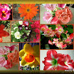 Search results for flowers8 3D.jpg