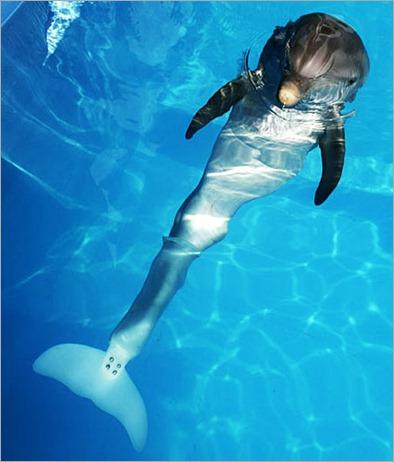 winter-delfin (2)