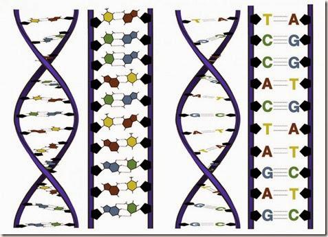 codigo-genetico-por-internet