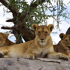 Löwenrudel, Namiri Plains © Foto: Judith Nasse | Outback Africa Erlebnisreisen