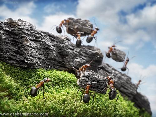 formigas inacreditaveis incriveis desbaratinando  (13)