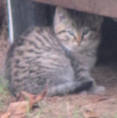12.20.12 darker kitten under camper