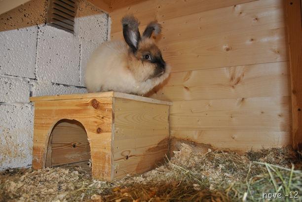 kaninene 035