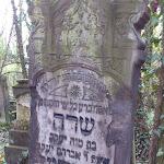 Cmentarz_zydowaki_w_Czestochowie_02.JPG
