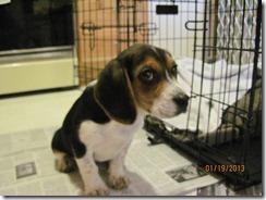 jan 2013 & puppy Scout 059