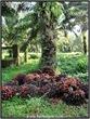 AVV_091_DSCF1595_www.keralapix.com_091