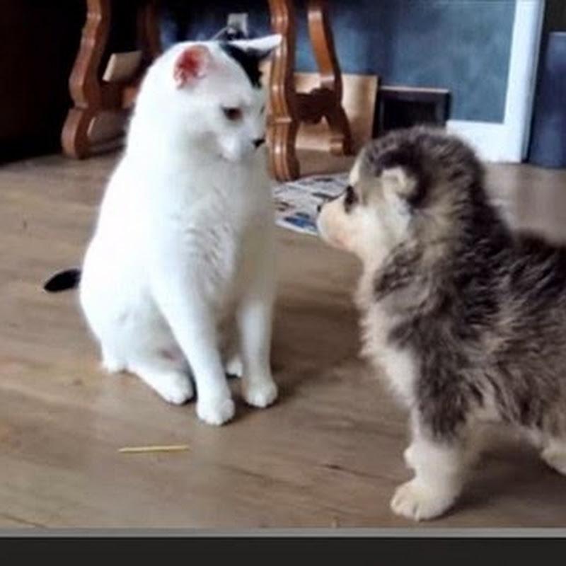Η γάτα της υπομονής
