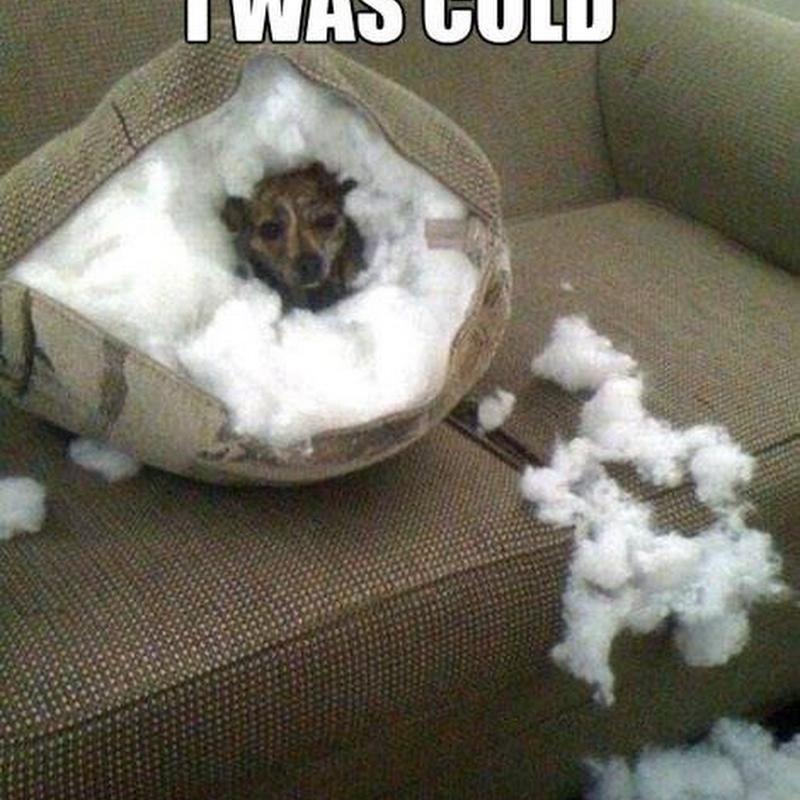 Alasan Jangan Tinggalkan Anjing di Dalam Rumah
