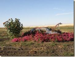 Flowers-car