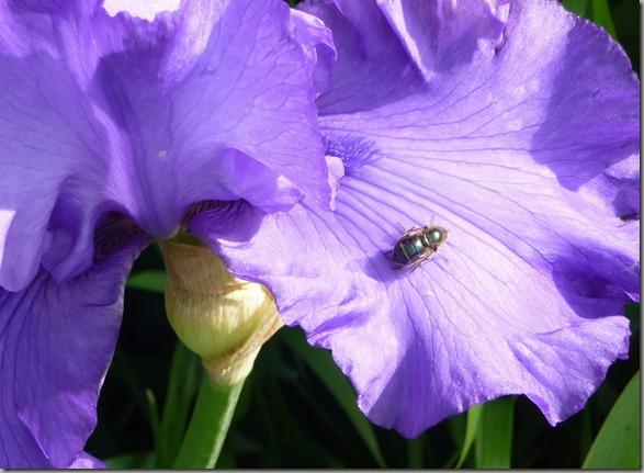 flowers 023