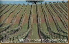 Планировка рядов виноградника