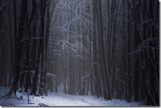 10589647-dark-forest-with-snow-on-the-branches-of-the-trees-in-the-winter