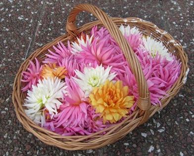 Dahlienblüten von Bärbel
