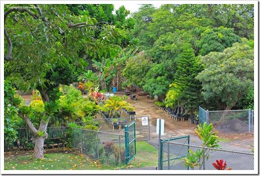 Beau 130718_MauiNuiBotanicalGardens_042. Maui Nui Botanical Gardens Nursery.  130718_MauiNuiBotanicalGardens_045