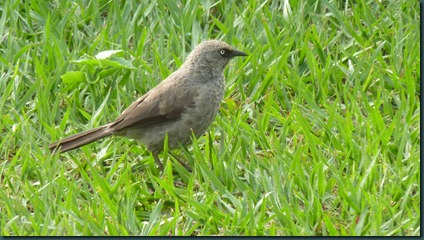 birds 008