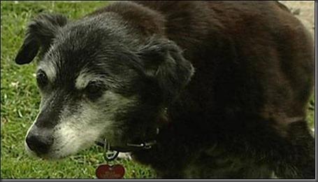 oldest-dogs-guinness-world-02